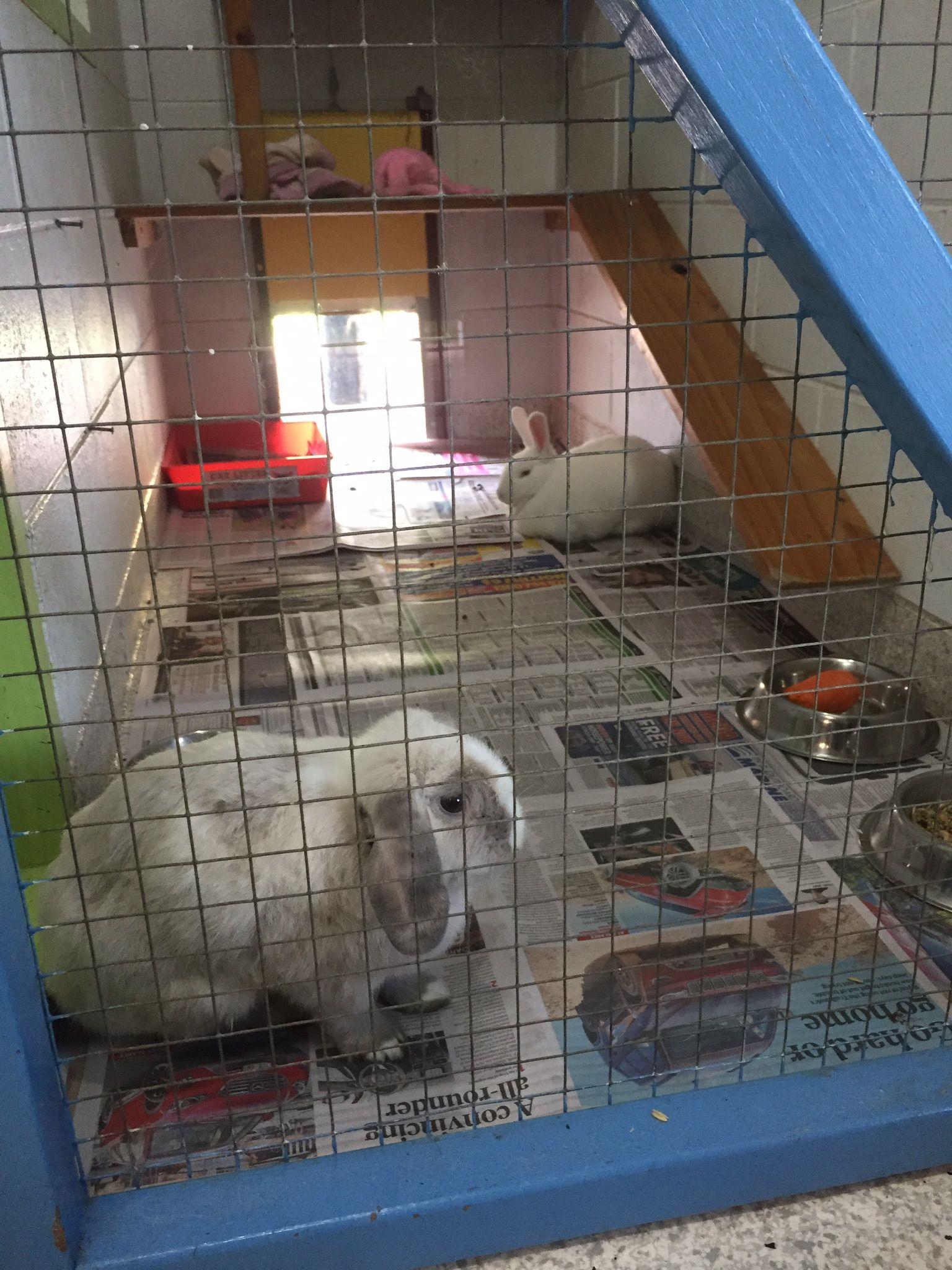 rabbit hutch indoor