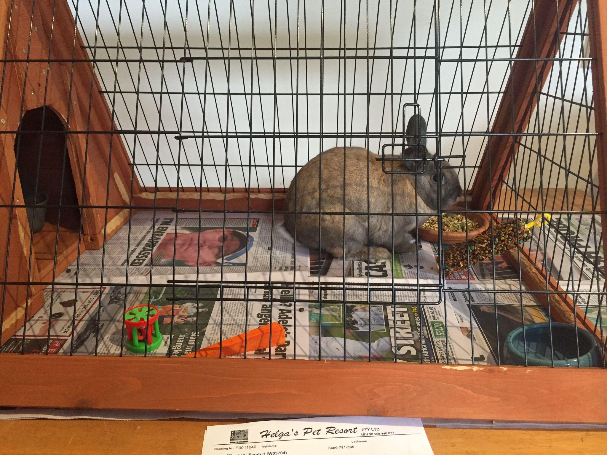 rabbit boarding near me